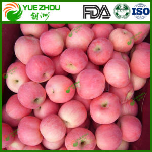 싼 가격을%s 가진 Yantai에서 최신 판매 FUJI Apple 유기 신선한 FUJI Apple