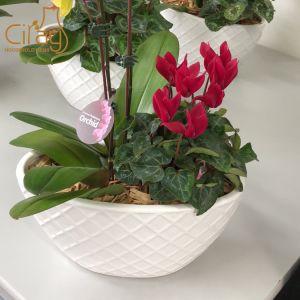 十字パターンを持つ蘭のための楕円形の植木鉢