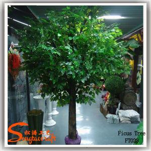 Venda por grosso de fábrica 2015 Mini Ficus Banyan árvores artificiais