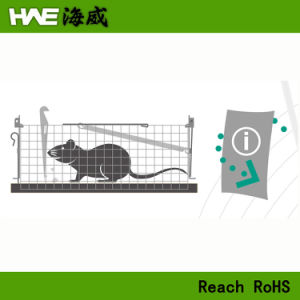 Viva humana camundongos do compartimento da armadilha de rato Rato