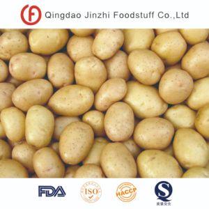 Nova colheita de batata da New Holland frescos provenientes da China