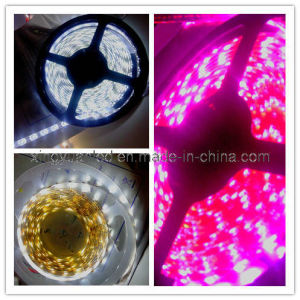 Tira de LEDS/// Cinta de LED flexibles impermeables (BF-XY-3528-30-1M)