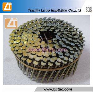 Chiodo comune della bobina galvanizzato elettrotipia con la tibia liscia