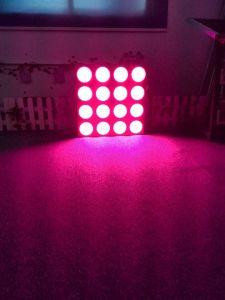 Los Estados Unidos Canadá Venta caliente crecer Lámpara LED de alta potencia 1200 W de luz crecer