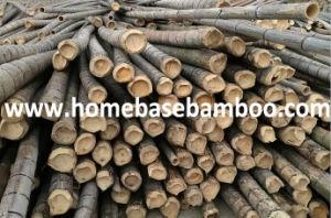 La FDA le couvercle de bambou avec bouteille de verre d'étanchéité en silicone pour bac en plastique