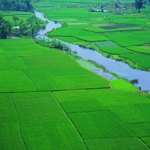 Het Oplosbare Kalium Fulvate van 100% voor Irrigatie en BladNevel