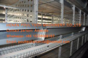 알제리아 가금 농장 - 건전지 닭 감금소 & Breeding 감금소 & 자동적인 공급 시스템을%s 가진 층 감금소