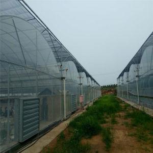 中国のコショウのための専門のプラスチックフィルムの温室