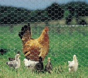 Alambre de pollo / MALLA DE ALAMBRE hexagonal