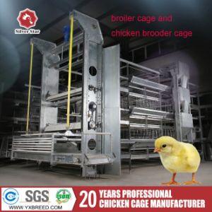 H de Apparatuur van het Gevogelte van de Kooien van de Kip van de Laag van het Ei van het Type