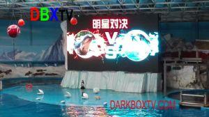 Installation facile à l'intérieur de la Chine fournisseur P6 affichage LED