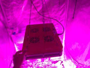 Le verdure LED della serra dell'Apollo 180W coltivano l'indicatore luminoso
