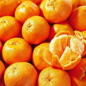 Des fruits frais, frais, frais Ponkan Mandarin Orange