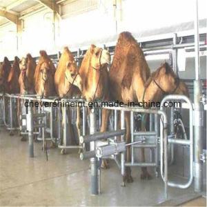 Medidor Eletrônico Full-Automatic sala de ordenha Camelo Máquina para explorações leiteiras