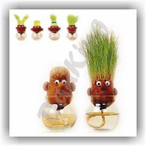 2017 новый детский мини-Craft бонсай подарочный набор растений