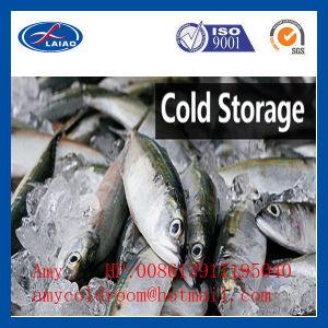 Congeladores de peixes de piscicultura de sala de marisco da África de marisco