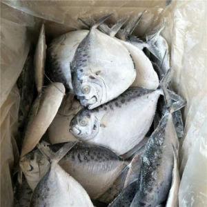 Moonfish Alimentação / Peixe congelado 150-200g/Seafood