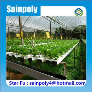 Diseño de fábrica de efecto invernadero hidropónico utiliza agrícola en venta