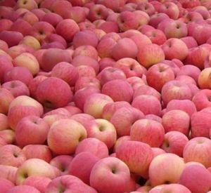 3.5-5% de Azijn van de Cider van de appel