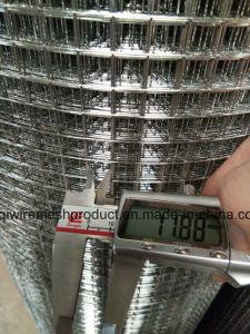 Горячий DIP / оцинкованной сварной проволочной сеткой 0,8мм * 1.5m высокое для Афганистана