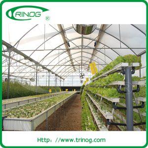 De plus en plus de la culture hydroponique de laitue système pour la vente