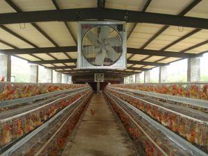 養鶏場の換気扇の換気装置機械空気クーラーシステム