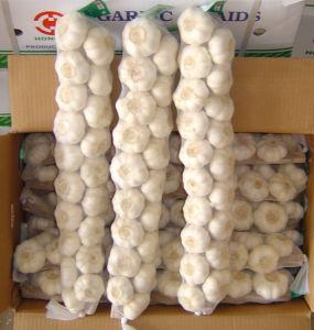Nuovo buon aglio bianco normale dell'esportazione da solo/eccellente fresco sbucciato puro all'ingrosso, aglio disidratato