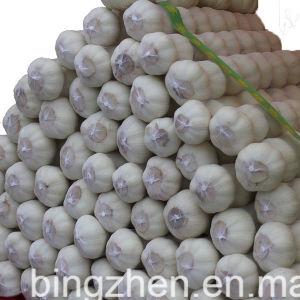 Nueva Cosecha chino fresco Ajo Blanco (5.0cm normal, de 5.5cm, 6.0cm)