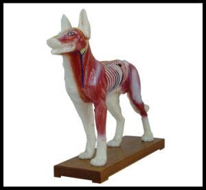 Акупунктура модели животных (M--6-D собака модели)