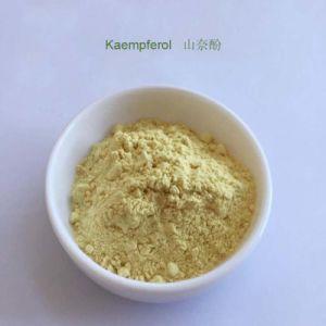 A Medicina Kraeftens Bekaempelse , Luz Kaempferol Pó amarelo CAS 520-18-3