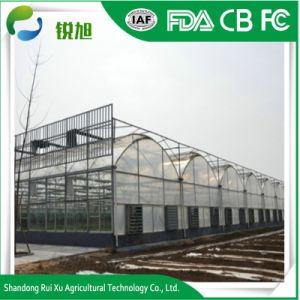 Agricultura/Filme Multi-Span Comercial para efeito de estufa Flower/Tomato/Óleos vegetais