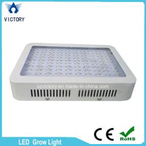 I doppi chip LED da 300 watt coltivano l'indicatore luminoso