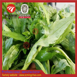 Légumes Fruits / Lavage machine à laver / Ligne de production de légumes