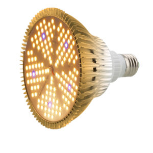 China 2019 Best Selling Full Spectrum planta crescer LED Light