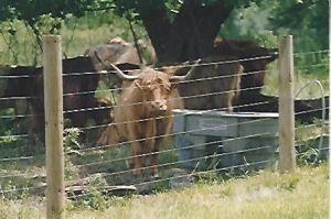 動物のための熱浸された電流を通された鉄の金網の家畜の塀のパネル