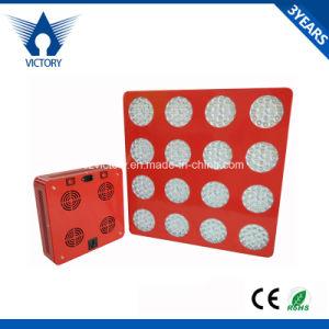 1000W LED coltivano l'indicatore luminoso chiaro della serra