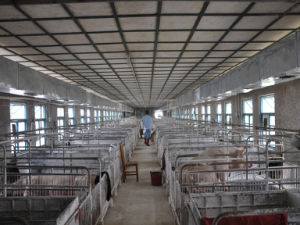 Вентилятор птицы/ pig сарай/ вентилятора вентилятор фермы/ фермы системы охлаждения