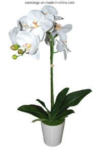 PE Орхидея Phalaenopsis в пластмассовый сосуд искусственные цветы для дома (48637)