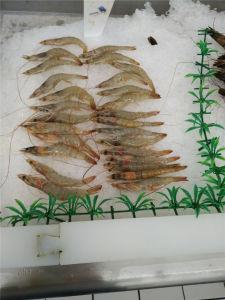 500кг/день ресторан морепродуктов оборудование прейскурант