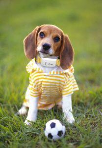 Superminilanger Reservezeit-Hundekatze-Haustier des Verfolger-Tk909 persönlicher GPS-Verfolger/IOS /Andriod APP-freier site-Service