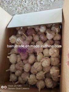 L'ail frais & blanc Granules d'Ail Ail déshydraté en Chine