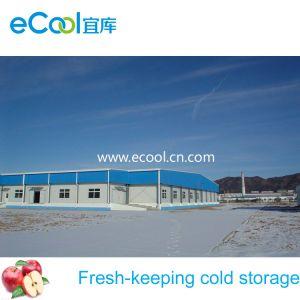 Walk-in Kühlraum für Gemüse-Obstverarbeitung-Verteilungs-Kaltlagerung