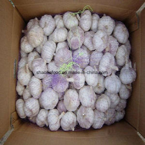 2018 새로운 작물 최고 질 신선한 Garlics