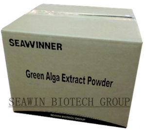 Fertilizante orgánico Extracto de Algas en polvo