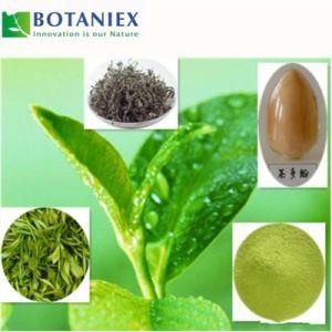 Hoher Reinheitsgrad-grüner Tee-Auszug L-Theanine für Entspannung