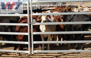 Comitato ovale delle pecore della capra del metallo delle rotaie di vendite calde che recinta per il recinto per il bestiame/che coltiva