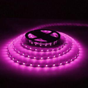 Nastro chiaro impermeabile flessibile della striscia SMD5050 di colore rosa 5m