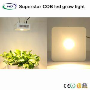 LA PANNOCCHIA LED del superstar si sviluppa chiara con i chip del CREE per Veg