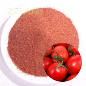 Certifiés casher la poudre de tomates séchées de pulvérisation