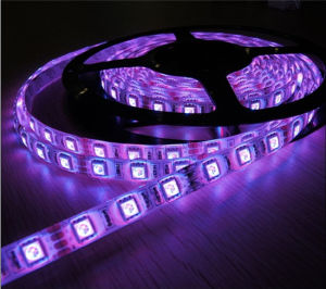 Impermeabilizzare 5m 300 luce flessibile 60 LED/M, striscia del LED 5050 SMD 12V del LED